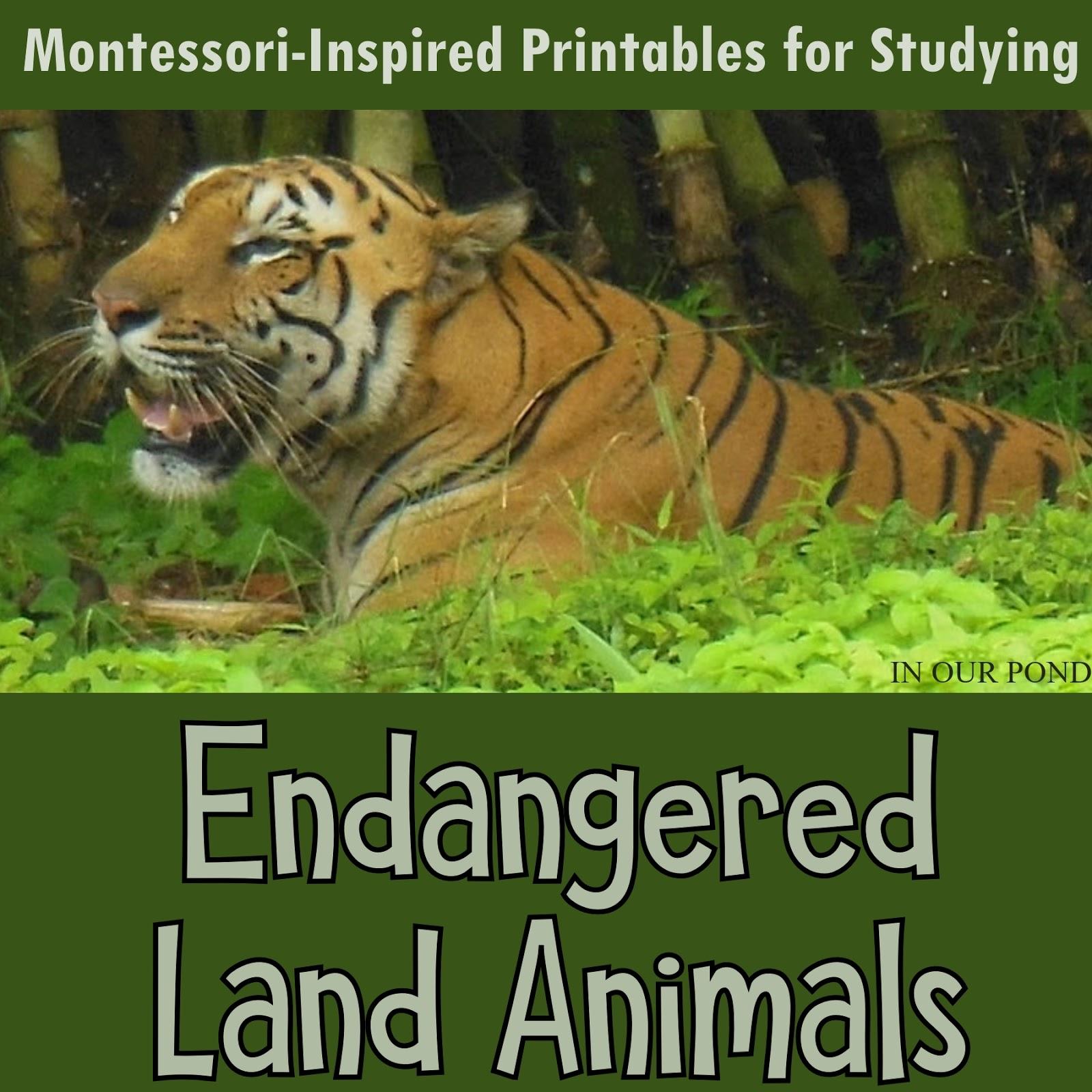 Endangered Land Animals 3 Part Cards