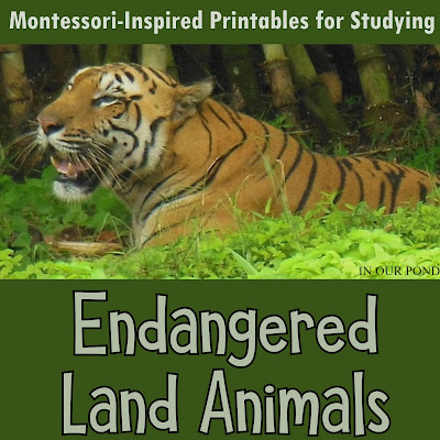 Endangered Land Animals 3-Part Cards from In Our Pond #montessori #printable #homeschool #montessoriathome #homeschoolprintables #school #montessoriactivities