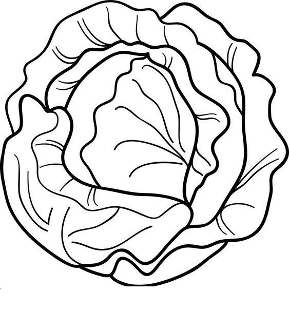 Tranh tô màu rau bắp cải