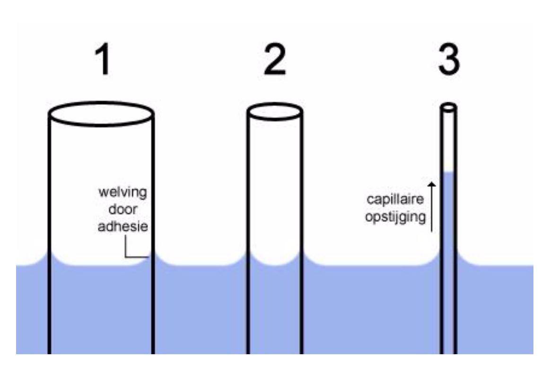 capillaire werking moestuin volkstuin