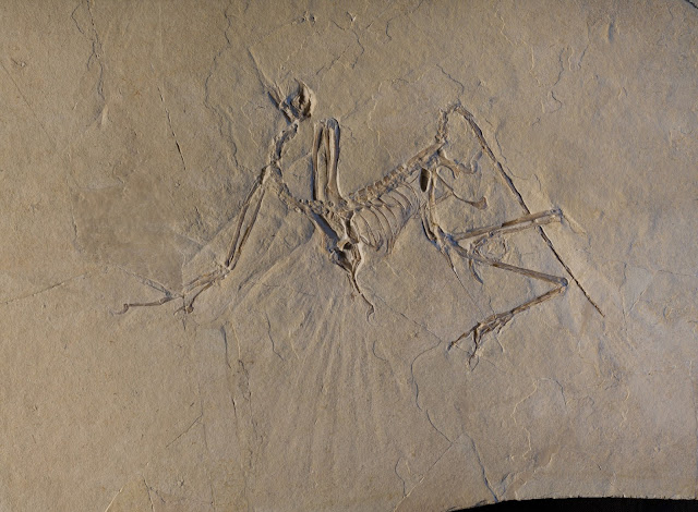 The early bird got to fly: Archaeopteryx was an active flyer