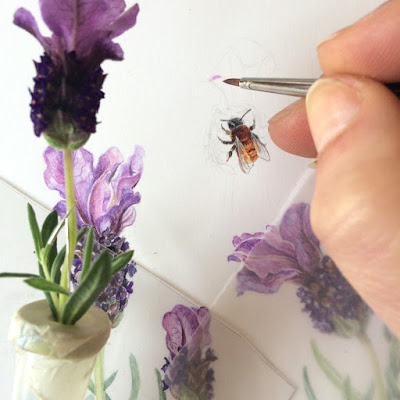 Andrena fulva, Tawny Mining Bee illustration with Spanish lavender being painted in watercolour on Botanical Ultra Smooth Paper by Shevaun Doherty