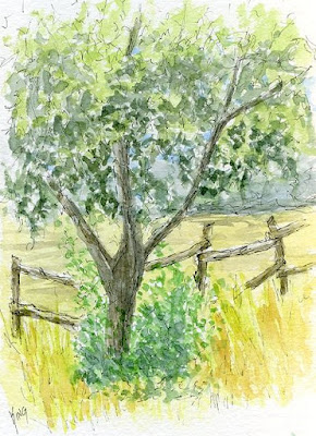 art plein air sketch watercolor tree fence