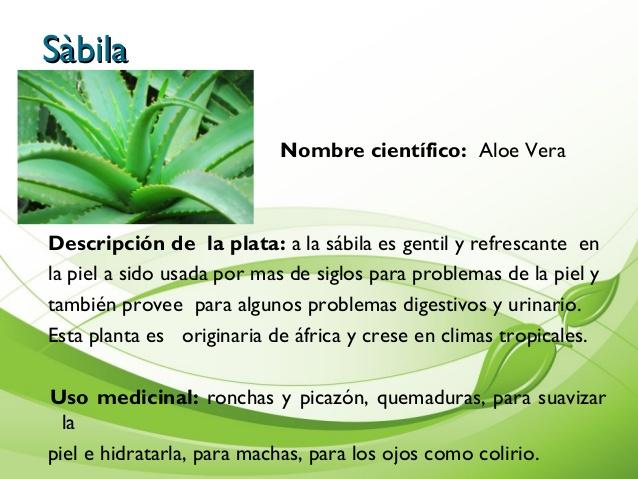 para que se usa la sabila como planta medicinal