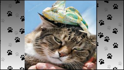 Gato x Camaleao