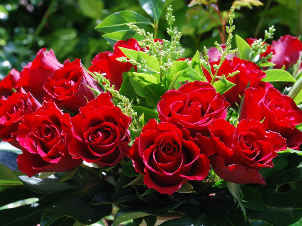 Amazing Red Roses Love Wallpapers And Backgrounds | Amazing Information