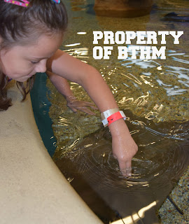 touching cowlnose ray
