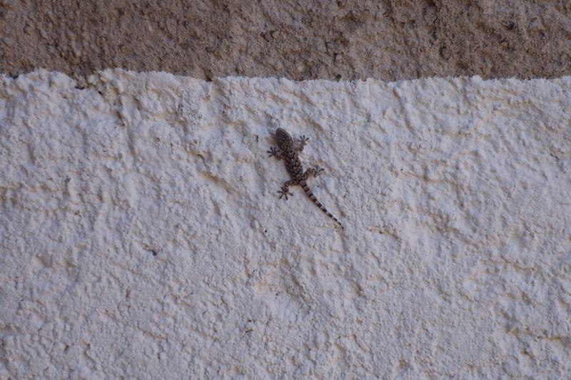 DECO : Ma terrasse, Gecko visiteur. / www.by-laura.fr