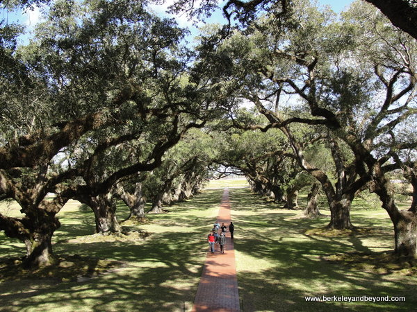 oak alley at Oak Alley Plantation in Louisiana