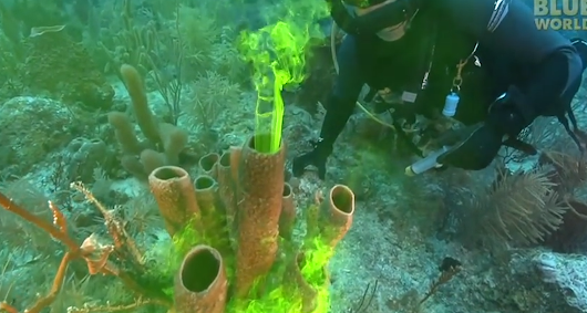 Sponges breathe out neon green water like they are smoking - Science Movie Today
