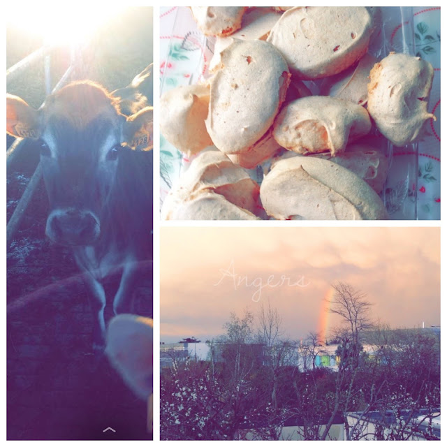 Angers vache meringue