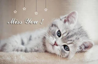 miss you pic with cat hd