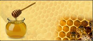 manfaat madu bagi kesehatan tubuh kita