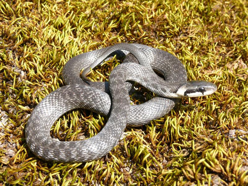 более, ядовитые змеи краснодарского края фото и описание фоток поста поменять