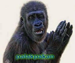 Gorilla, palakpakan funny memes