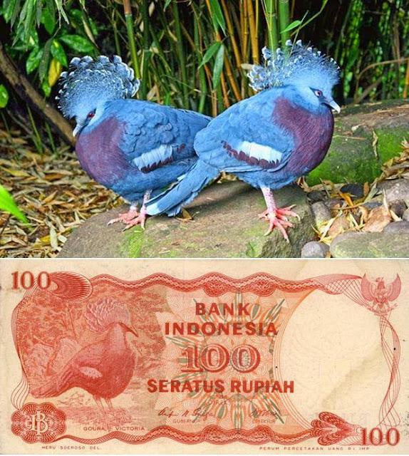 Burung di uang nominal 100