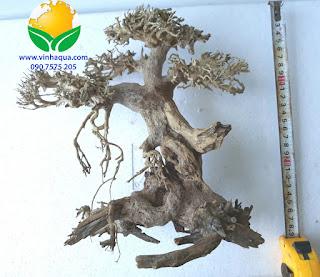 Lũa bonsai thủy sinh 3501