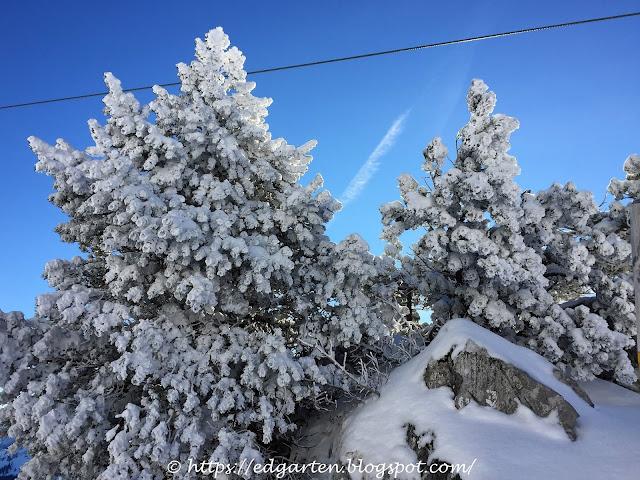 Verschneite Landschaft Stoos