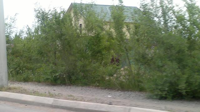 Дом за деревьями