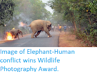 http://sciencythoughts.blogspot.co.uk/2017/11/image-of-elephant-human-conflict-wins.html