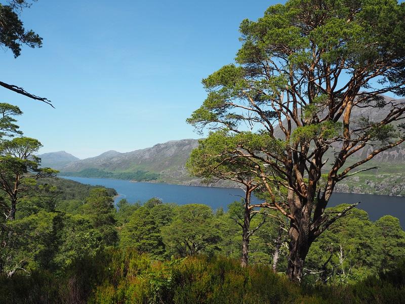 Loch Maree view NC500