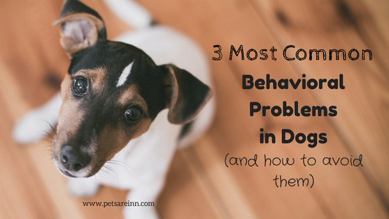 dog behavior issues