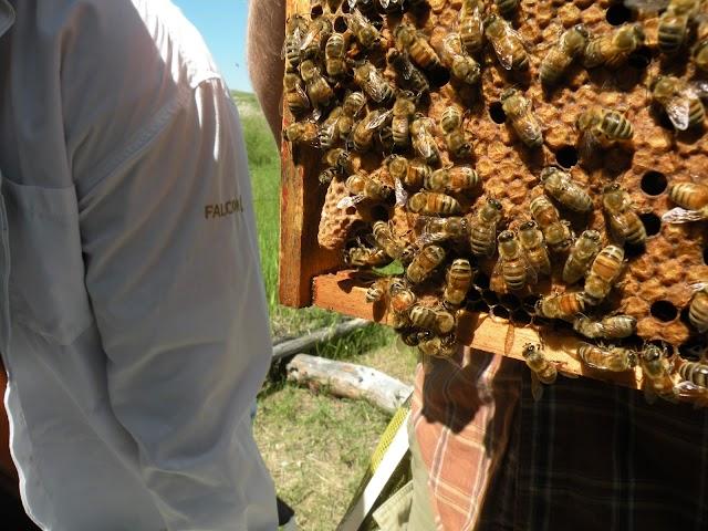 Η μεταχείριση του μελισσιού κατά τη διάρκεια του έτους!