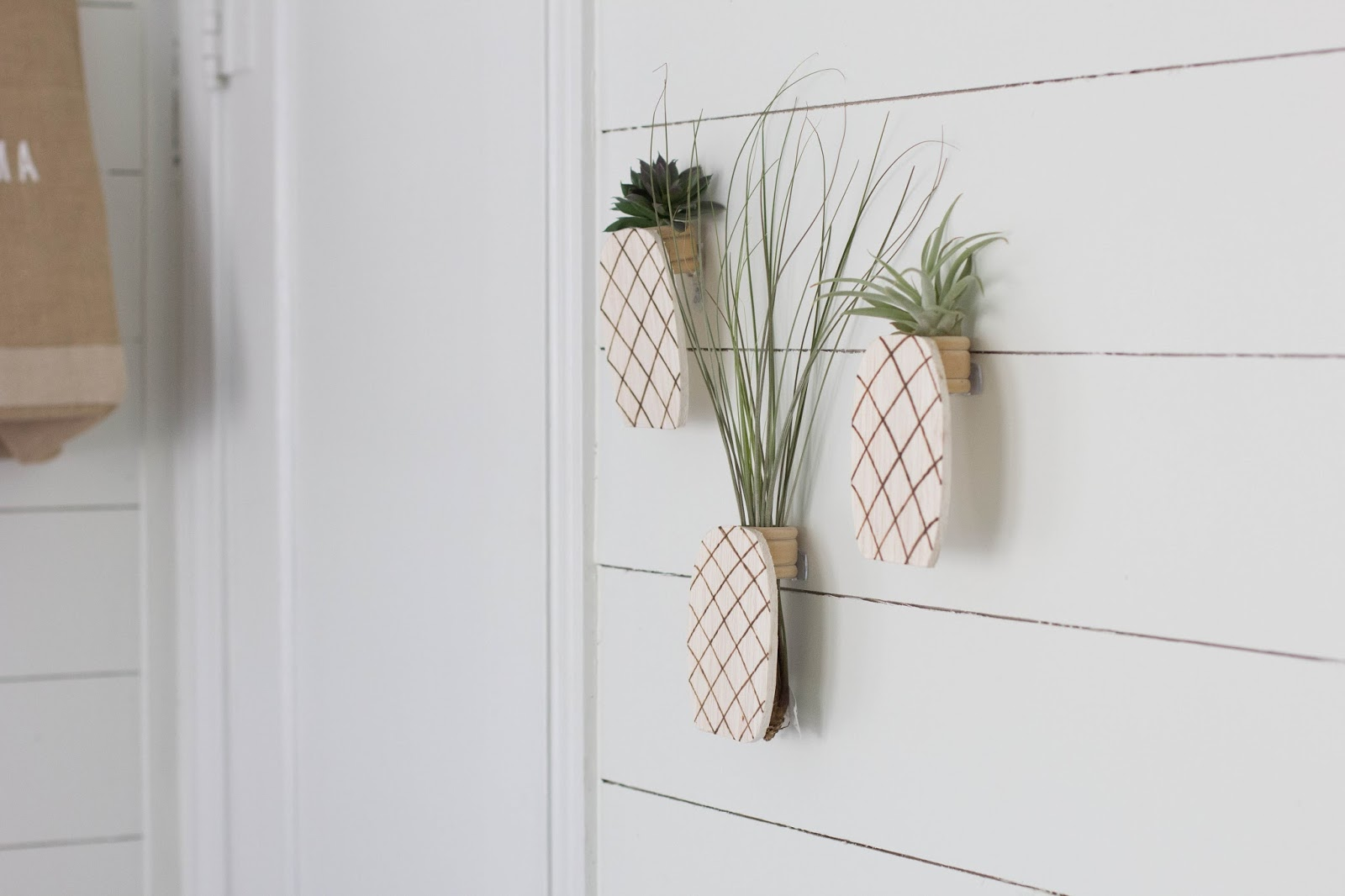 Always rooney pineapple air plant holder diy for Diy wall plant holder