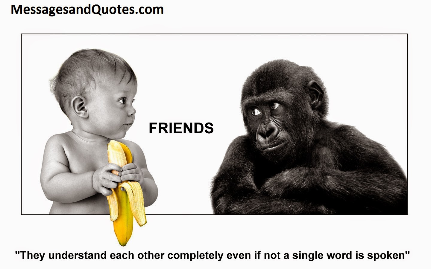 famous quotes and messages on friendship