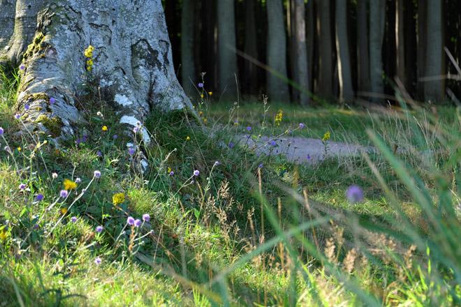 Heiligendamm, Nienhagen, Gespensterwald, Wald und Meer, magischer Ort, Ostsee, Reisen in Deutschland, Urlaub in Deutschland, Tag am Meer, Mecklenburg-Vorpommern, Bäderarchitektur, Seebäder an der Ostsee, Minza will Sommer