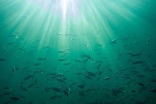Invita Sonora al curso sobre calidad del agua en acuicultura