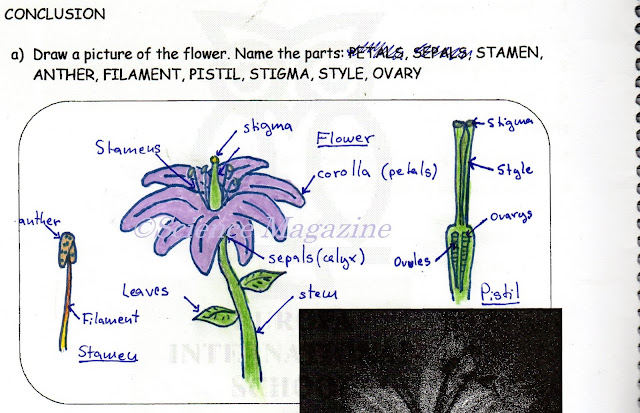 Science Magazine: IDENTIFYING THE PARTS OF FLOWERS
