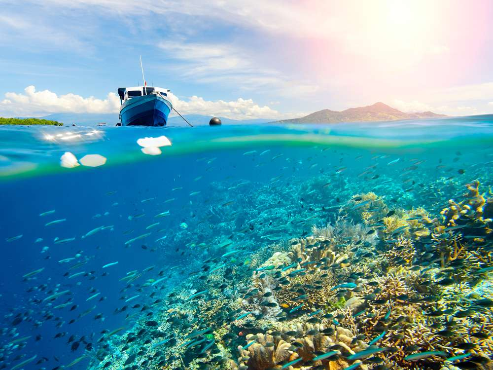 Beautiful Coral reef near tropical island of Sulawesi, Indonesia under and above water. (c) Shutterstock
