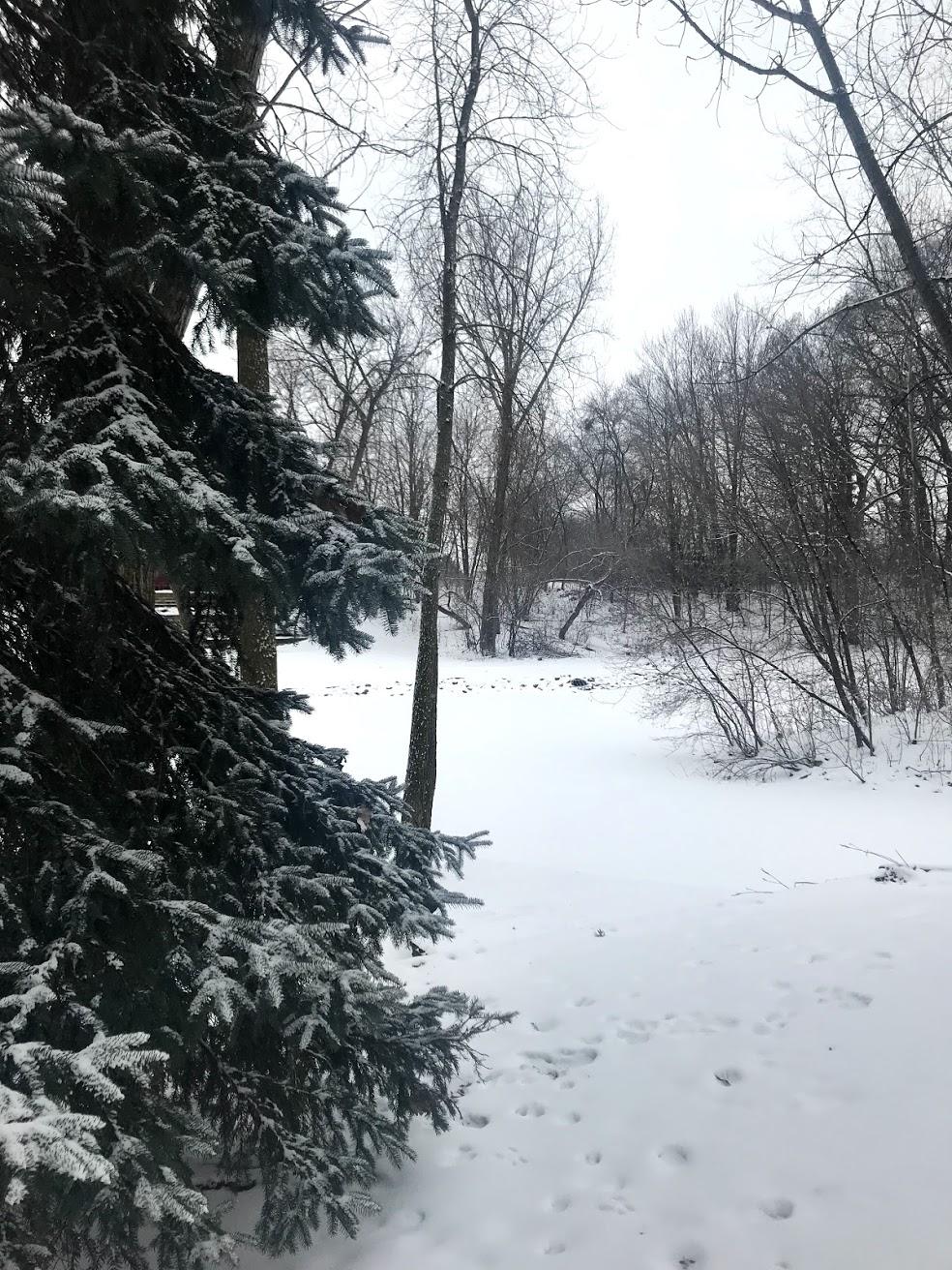 snowy-minnesota