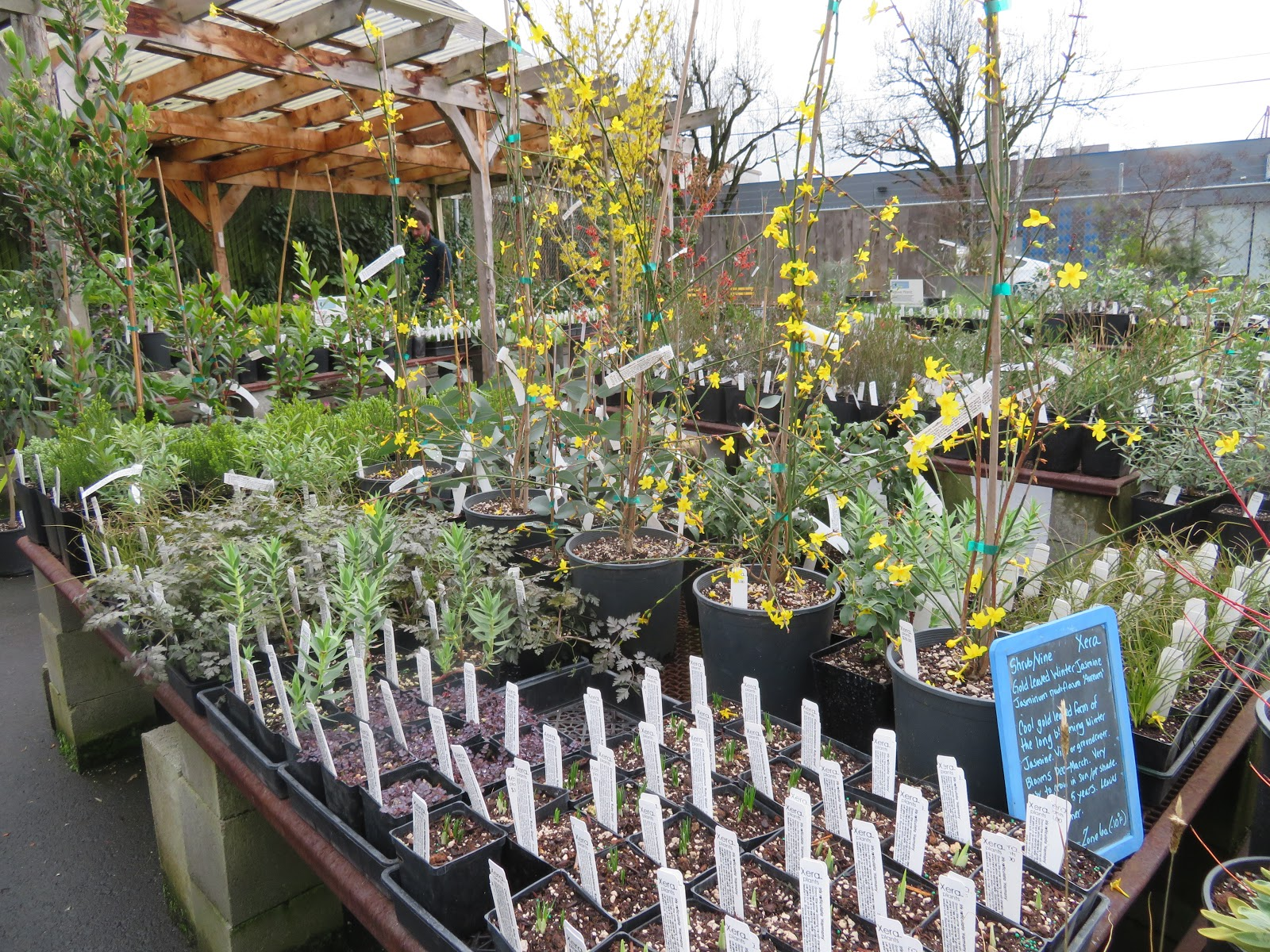 How to help tree nursery settle down in your garden