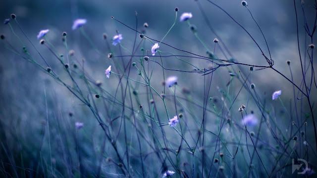 Beautiful Flowers HD Wallpapers Free Download