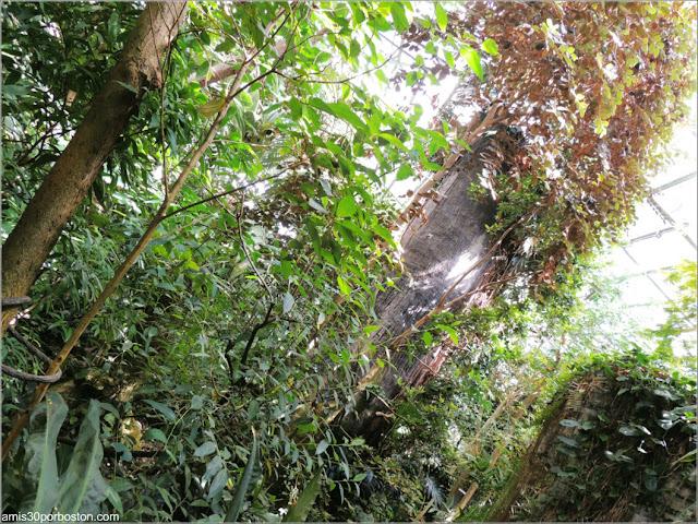 Biodôme de Montreal: Vegetación de la Selva Tropical
