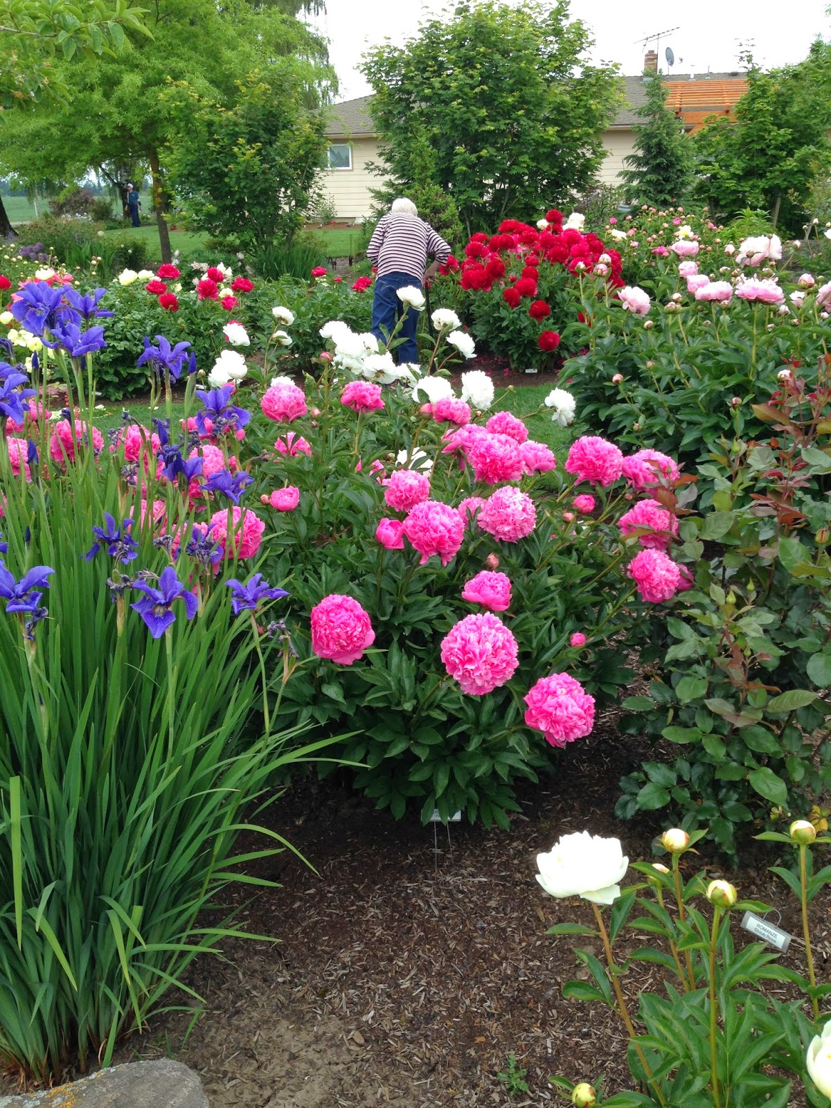 The Lents Farmer Pilgrimage To Adleman Peony Garden 2014