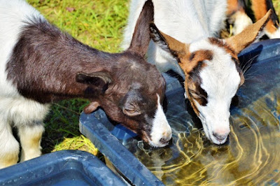 """New study shows that the tongue can """"taste"""" water, in a way."""