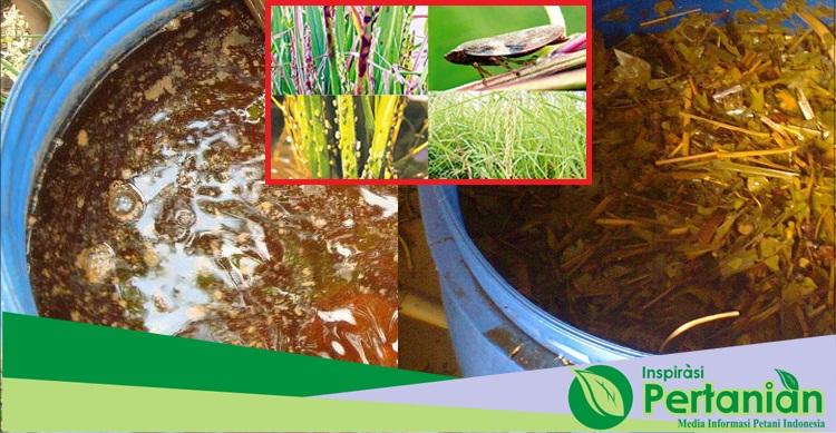 Cara Pembuatan Herbisida Pembasmi Hama Organik