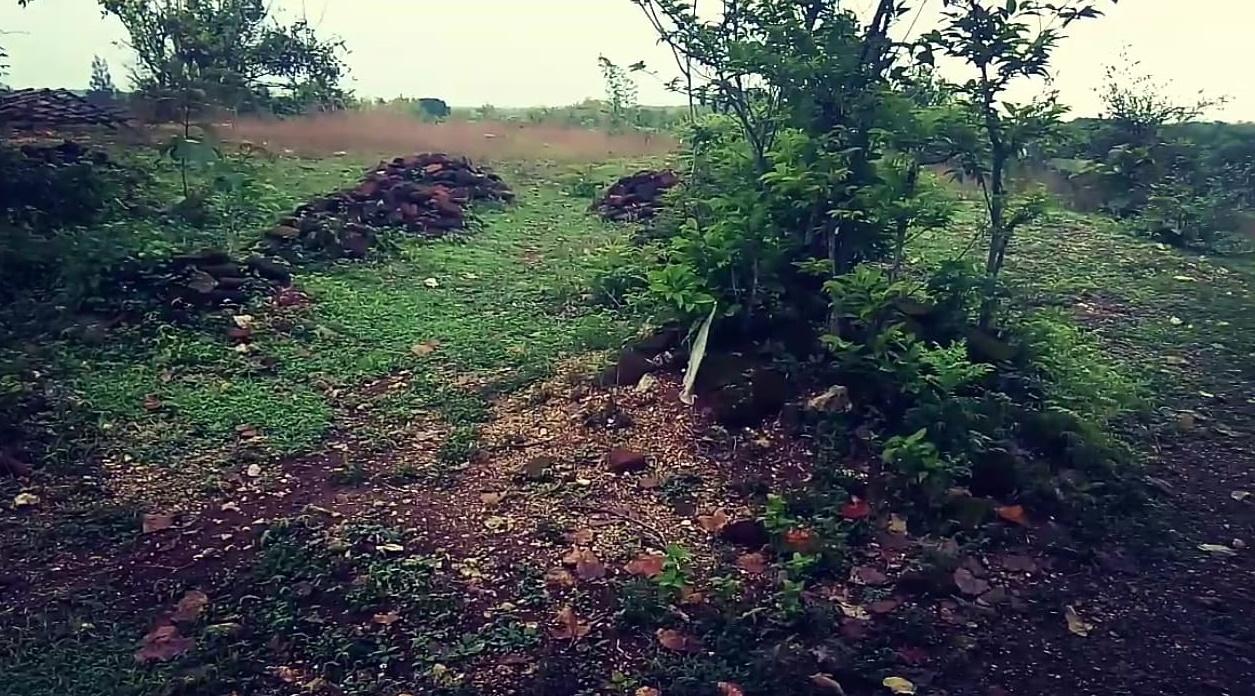 Foto tumpukan batu bata bekas bangunan candi di situs sentono