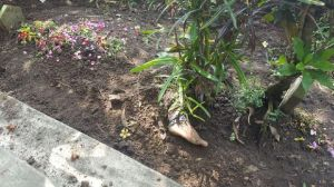 Viral, Muncul Kaki Menyembul di Atas Kuburan, Saat Digali Ditemukan Hal Menggegerkan
