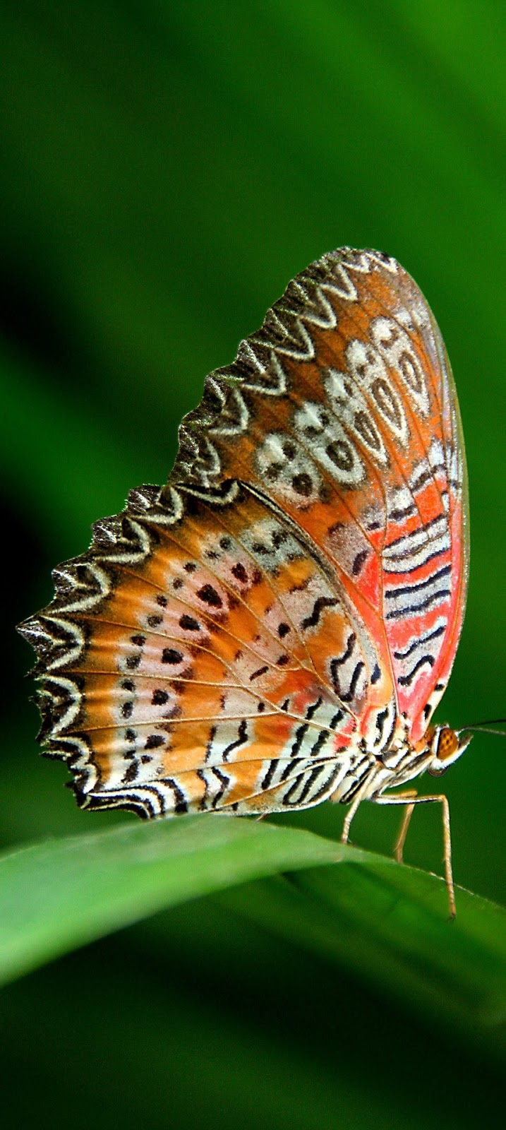A beautiful butterfly on a leaf.