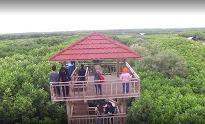 Tempat Wisata Hutan Mangrove Pandansari Brebes