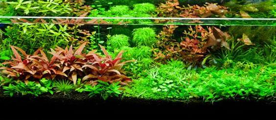 aquascapejuara: Taman Akuarium, Rumah Tinggal Hidupnya ...