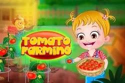 Bebek Elâ Domates Çiftliği - Baby Hazel Tomato Farming