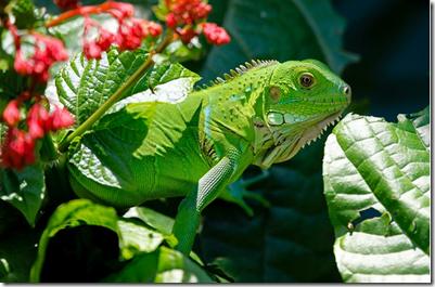640 Koleksi Gambar Hewan Reptil Dan Namanya HD Terbaik