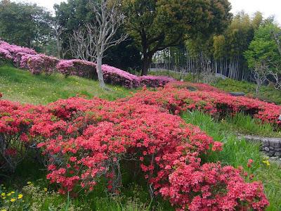 山田池公園 花木園