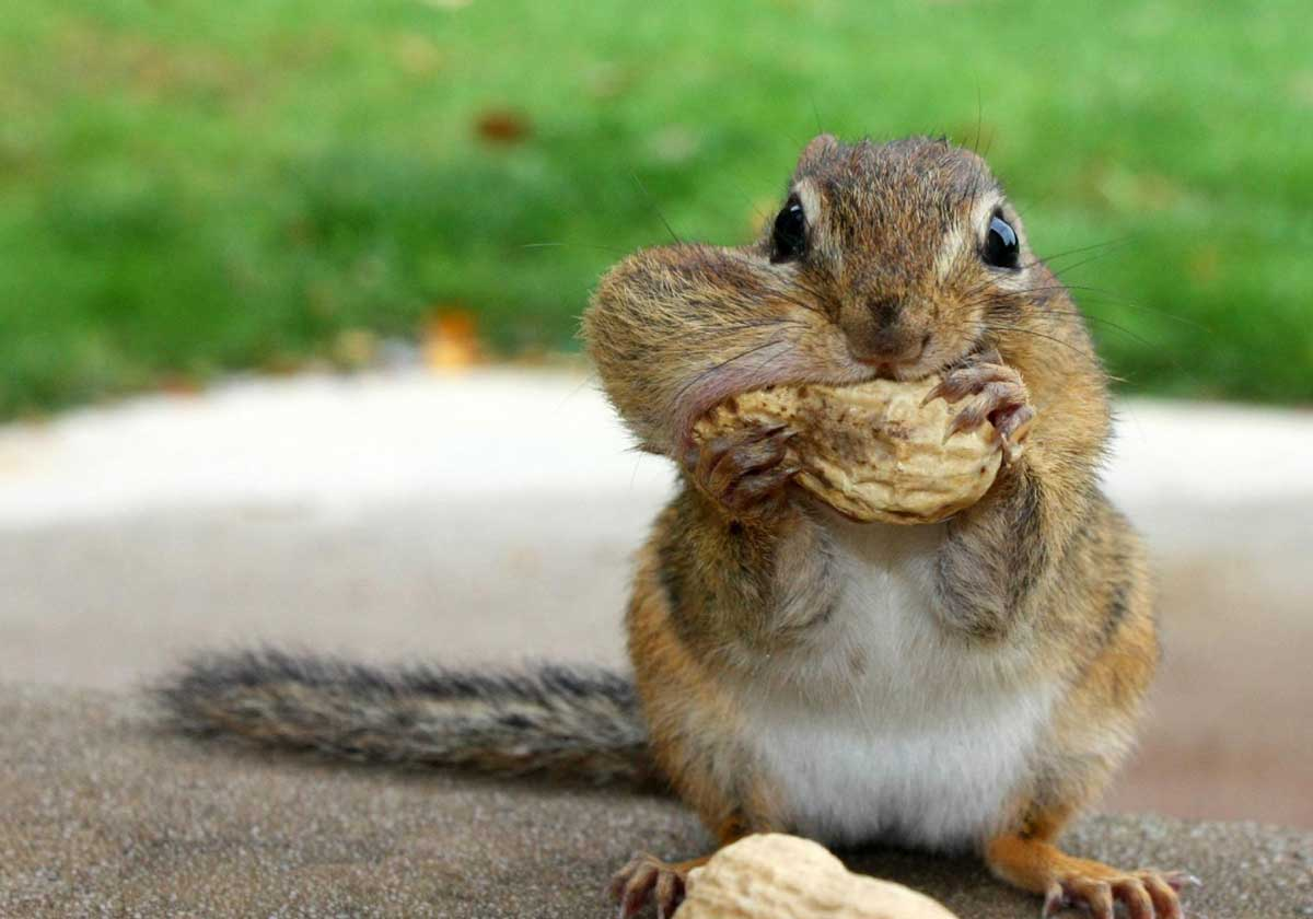 March 2013 funny and cute animals - Funny squirrel backgrounds ...