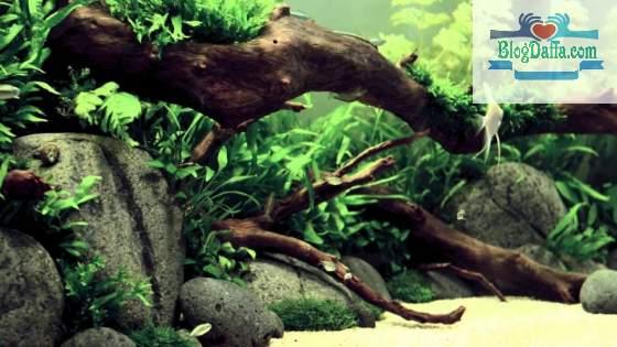 Kayu Hornwood aquascape